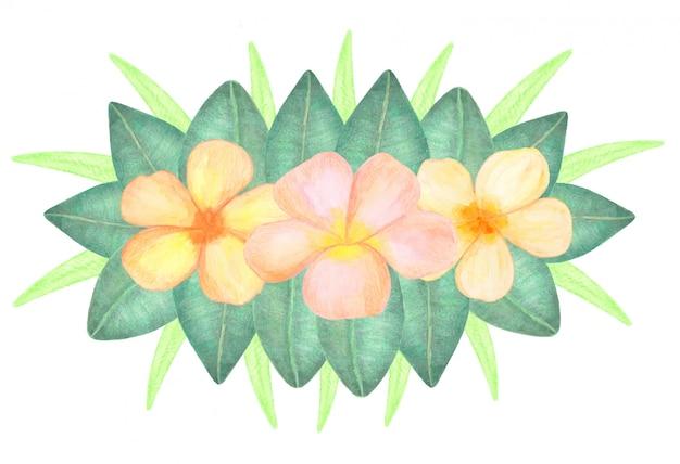 Tropische aquarel plumeria bloemen en bladeren