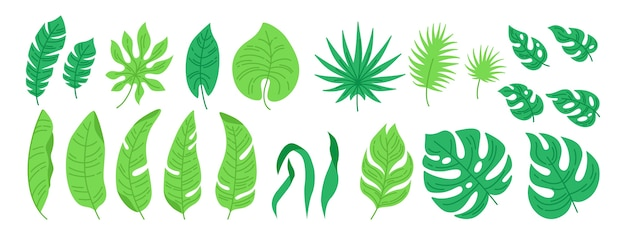 Tropische bladeren cartoon set. exotisch abstract blad, platte planten. monstera, palm en wild blad