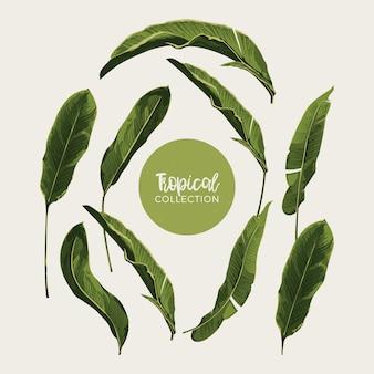 Tropische bladeren clip art set
