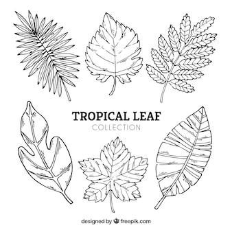 Tropische bladeren collectie in de hand getrokken stijl