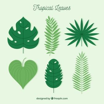 Tropische bladeren collectie