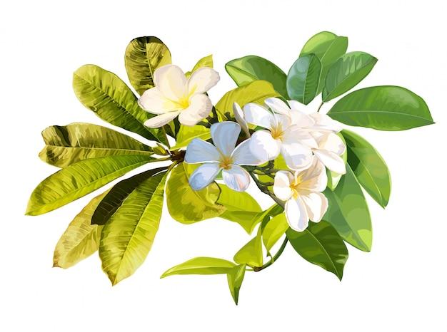 Tropische bladeren en plumeriabloem op witte achtergrond
