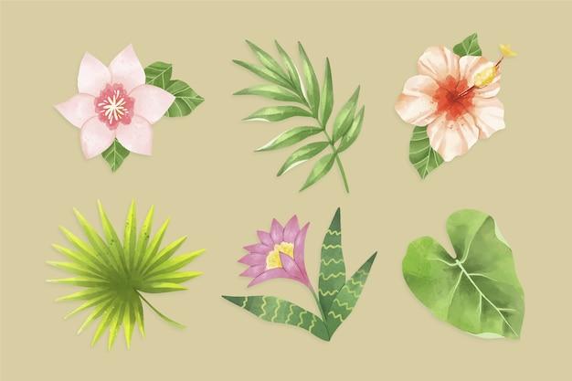 Tropische bladeren geïsoleerd op de achtergrond