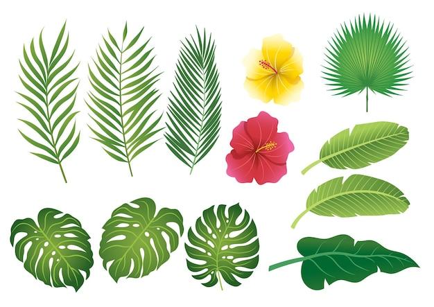 Tropische bladeren instellen vlakke afbeelding