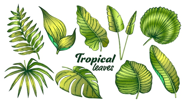 Tropische bladeren kleurencollectie