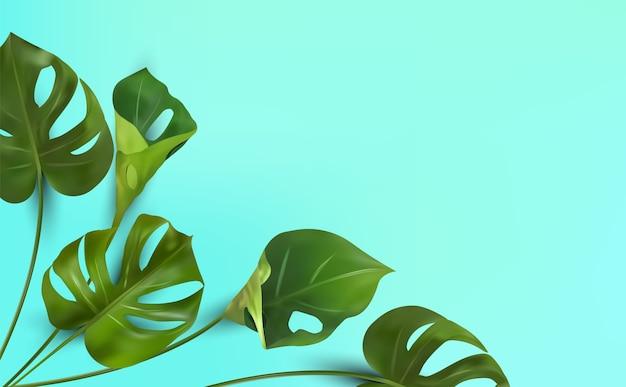 Tropische bladeren op een blauwe achtergrond, tropische gebladerte monstera met gespleten blad loof dat in het wild groeit.