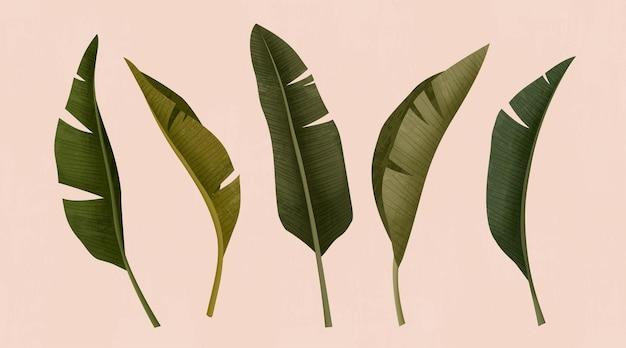 Tropische bladeren op roze achtergrond in 3d illustratie