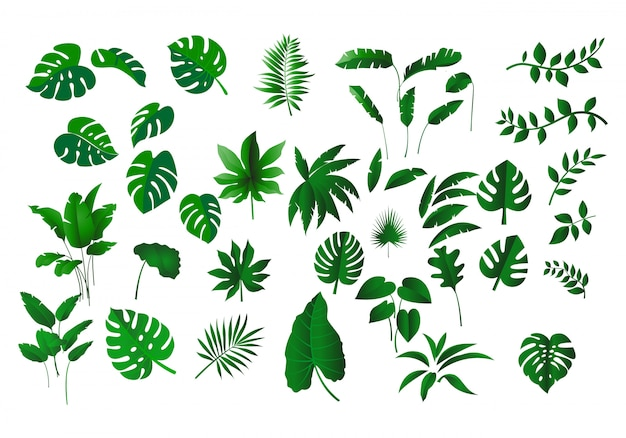 Tropische bladerencollectie