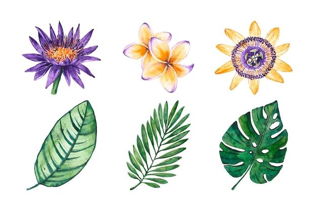 Tropische bloem en blad set