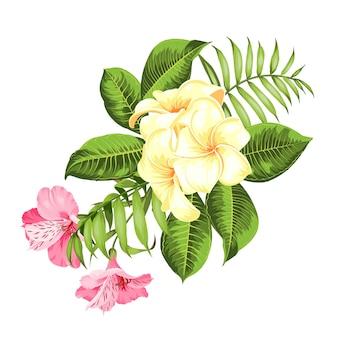Tropische bloem op witte achtergrond. vector illustratie.