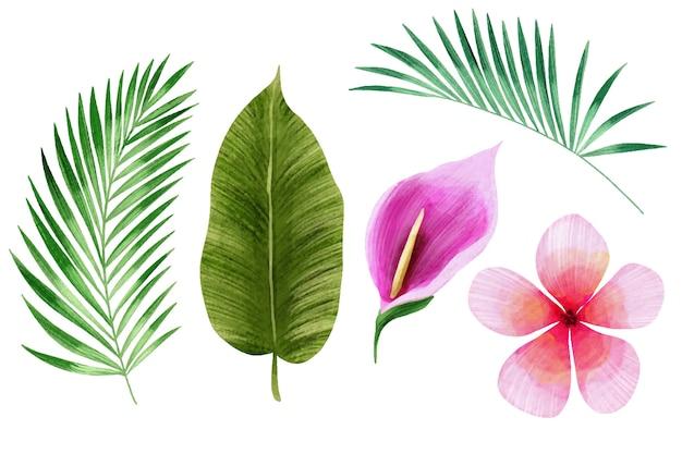 Tropische bloemen en blad collectie