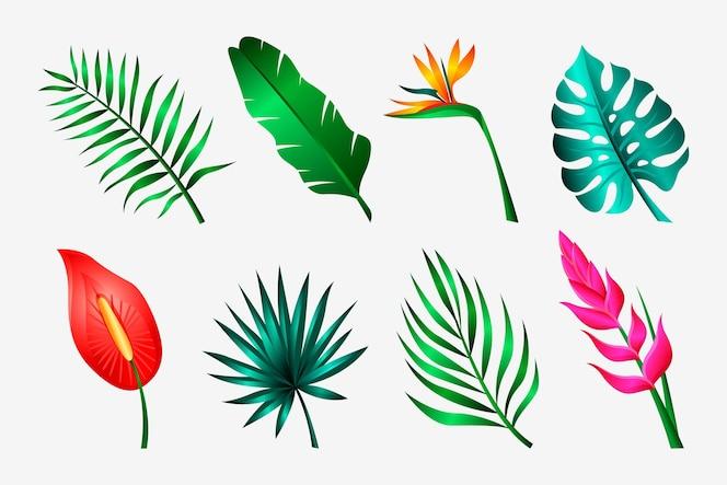 Tropische bloemen- en bladcollectie