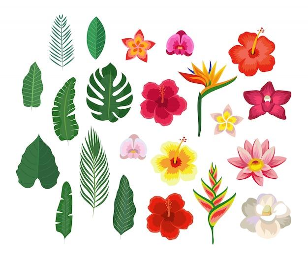 Tropische bloemen en bladeren, verzameling geïsoleerde elementen.