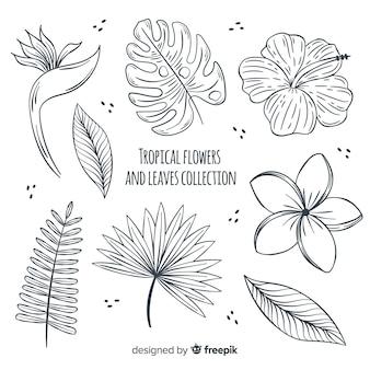 Tropische bloemen en bladeren