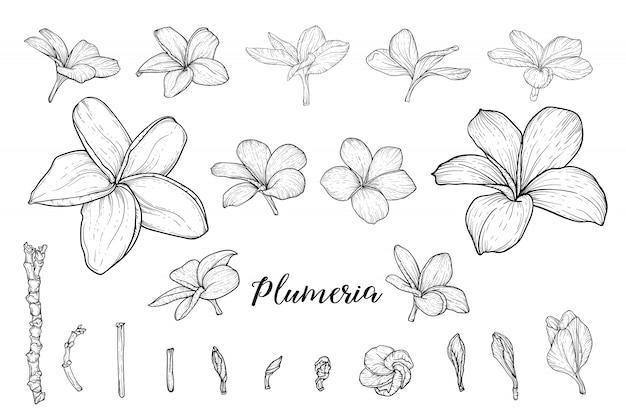 Tropische bloemen hand getrokken schetsen set. bloeiende orchideeën, exotische frangipani plant zwarte inkt illustraties. overzicht hibiscus, strelitzia, plumeria-bloesem