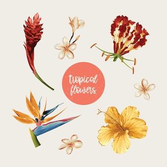 Tropische bloemen illustratieset