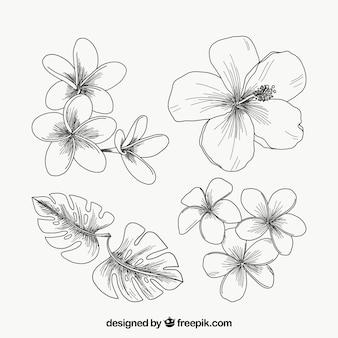 Tropische bloemeninzameling in uitstekende stijl