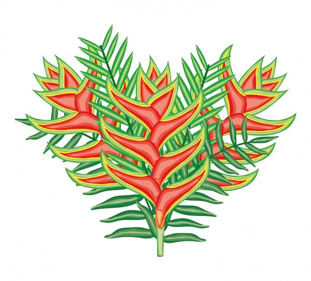 Tropische heliconias bloemen en bladeren planten