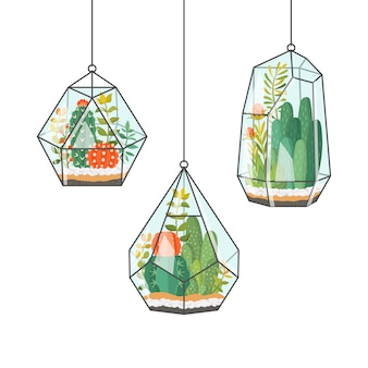 Tropische kamerplanten en cactus in hangende terraria
