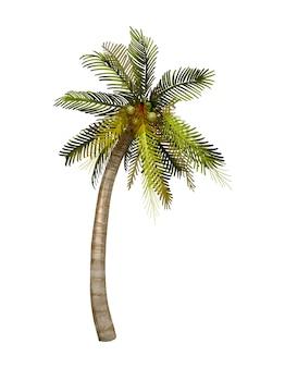 Tropische kokosnoot palmboom illustratie