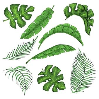 Tropische palmbladeren set, jungle bananenblad collectie