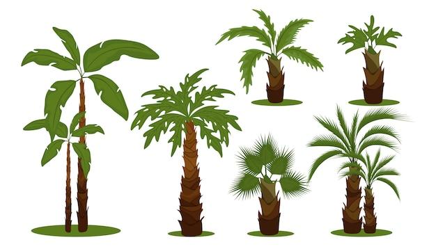 Tropische palmbomen. groene bladertakken en boomstammenbeeldverhaalinzameling op witte achtergrond. exotische bomen die op warme plekken groeien
