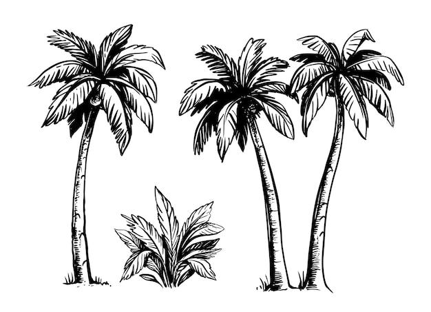Tropische palmbomen zwart.