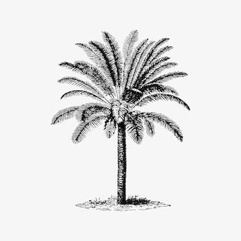 Tropische palmboom