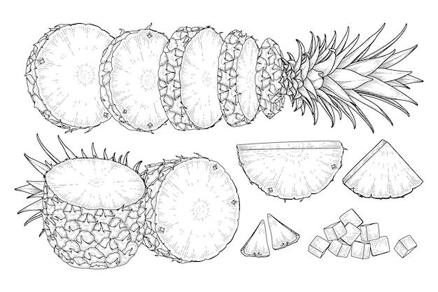 Tropische plant ananas hand getrokken schets vector botanische illustraties