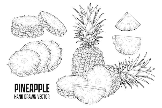 Tropische plant ananas hand getrokken schets vector botanische illustraties Gratis Vector