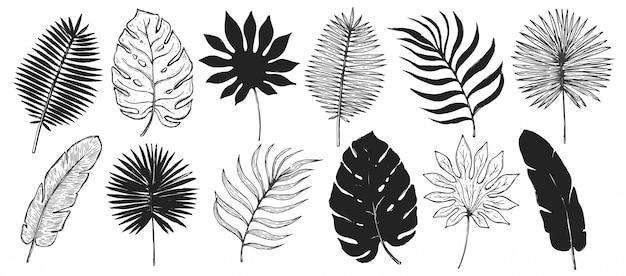 Tropische plant blad set. botanische bloemen elementen