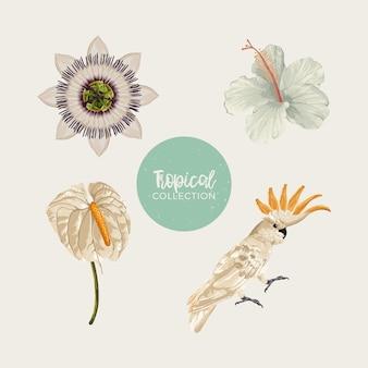Tropische thema illustraties set