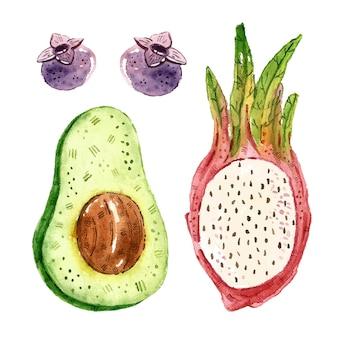 Tropische vruchten illustraties, set. aquarel illustratie.