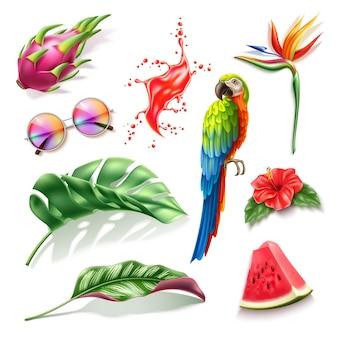 Tropische vruchten pitahaya watermeloen hibiscus strelizia bloem ara papegaai zonnebril rood splash