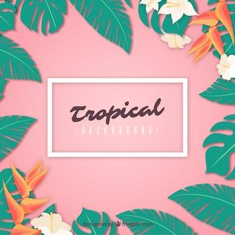 Tropische zomer achtergrond met de natuur