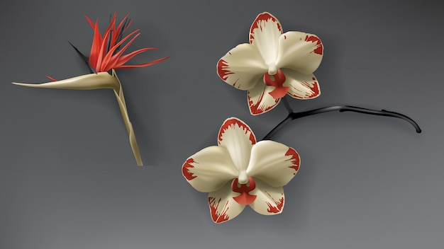 Tropische zwarte, rode en gouden orchideebloem op donker