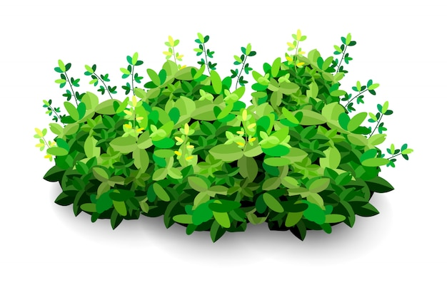 Tuinstruik. groene tuin vegetatie struiken