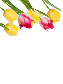 Tulpen ontwerpsjabloon of achtergrond.