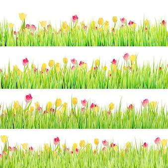 Tulpenbloemen in groen gras dat op wit wordt geïsoleerd