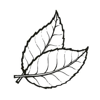 Twee blaadjes thee of munt hand getrokken schets symbool van biologische vectorillustratie