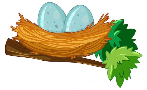 Twee eieren in nest