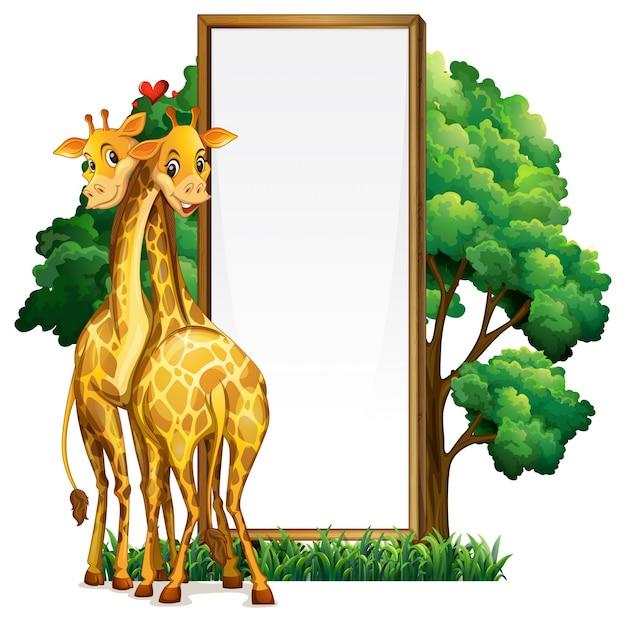Twee giraffen en leeg whiteboard