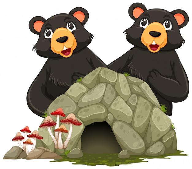 Twee grizzlyberen en klein hol op witte achtergrond