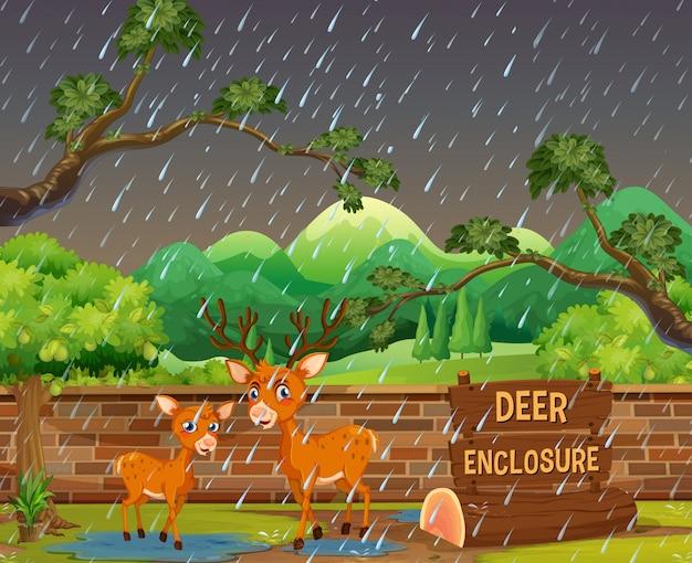 Twee herten in de dierentuin op rainny dag