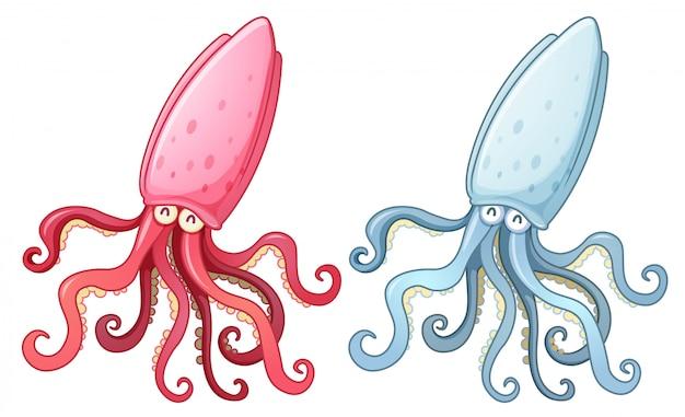 Twee inktvissen