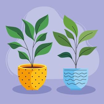 Twee kamerplanten in keramische potten