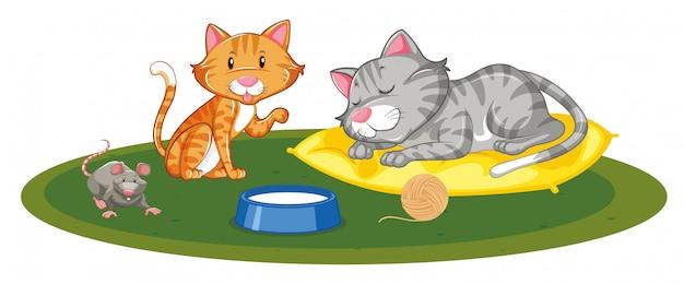 Twee katten en één muis spelen