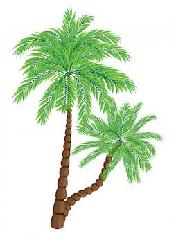 Twee palmbomen