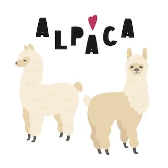 Twee schattige alpaca's met letters.