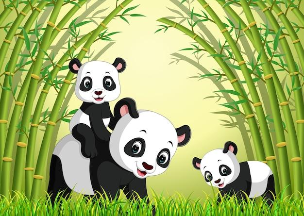 Twee schattige panda in een bamboebos